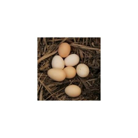 正宗散养生态土鸡蛋价格|土鸡蛋价格