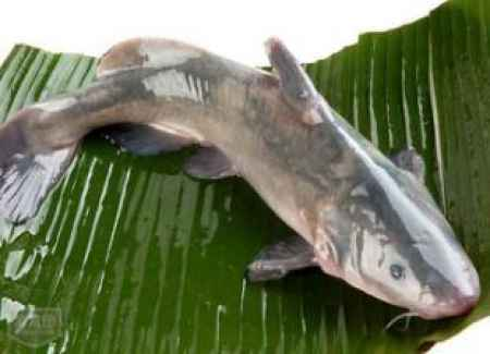 重庆野生鱼江团在哪里吃